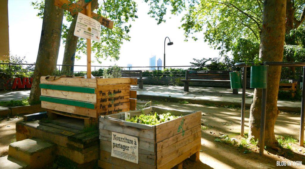 L'agriculture urbaine à Lyon   Blog In Lyon - Webzine Lyonnais